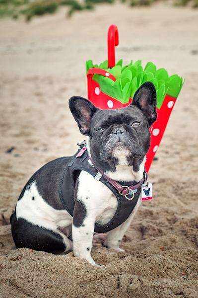 Hund vor rotem Schirm