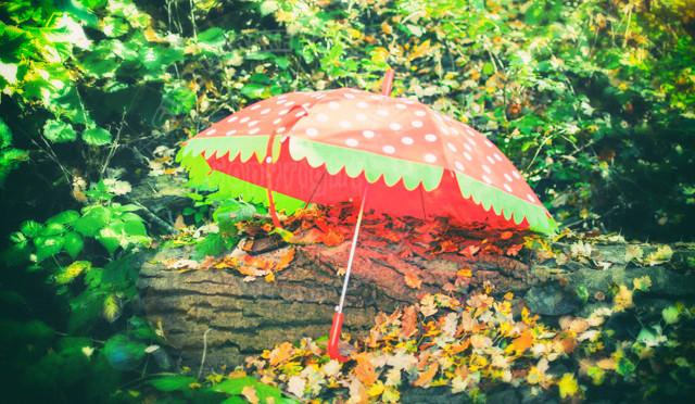 Der rote Schirm war heute im Wald