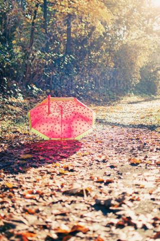 roter Schirm im Wald