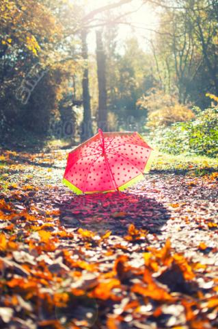 Der rote Schirm war im Wald